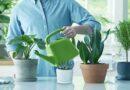 Légtisztító cserepes növények otthonra