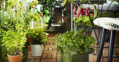 Fűszernövények a balkonon